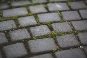 garden-moss-stone-paving-stones-doetuin