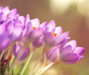 pink-flowers-garden-bloemen-planten-doetuin