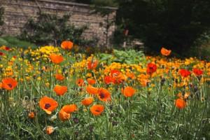 tuinonderhoud-doetuin